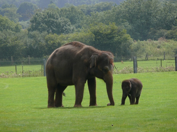 Elephants come in different sizes
